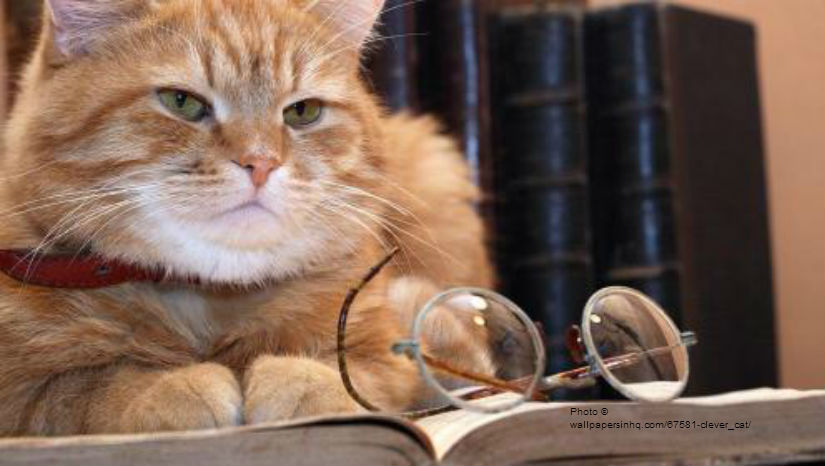clever_cat-991680